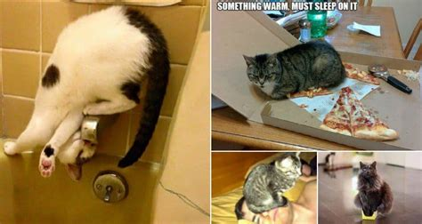 39 Hilarious Examples Of Cat Logic That Will Make You