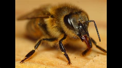 my new friend baby bumblebee bee really cute close up