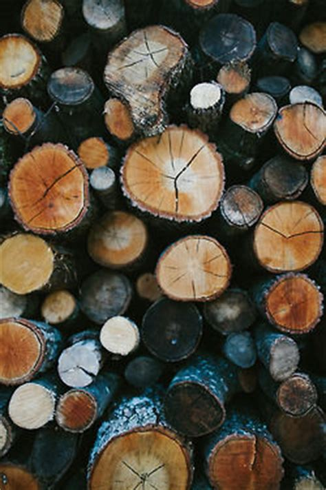 Tree Stumps Pictures, Photos, and Images for Facebook
