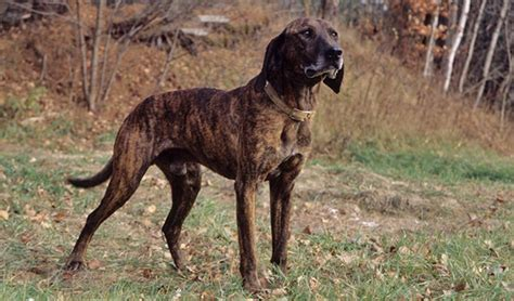 20 Cheapest Dog Breeds Updated for 2020