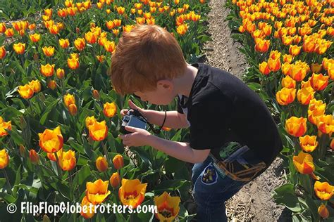 Tulip fields in Holland, when and where