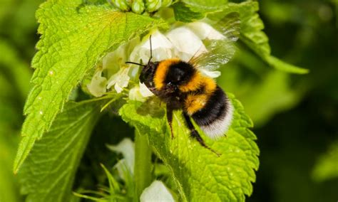 Bees feel the sting of climate change in the East of