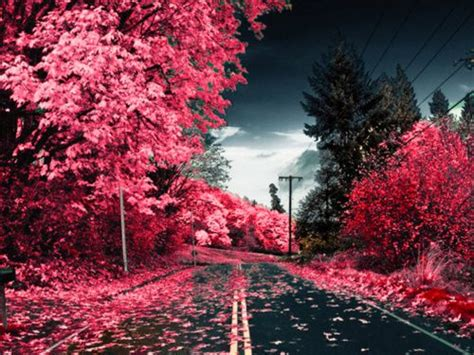 Beautiful pink scenery   Color: Pink   Pinterest